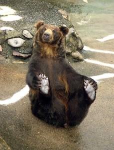 hokkaido bears